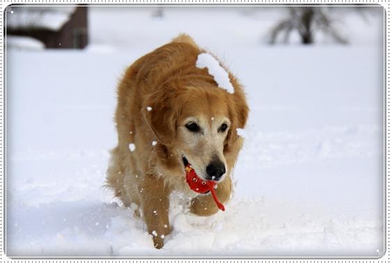 2012,2,20雪遊び4