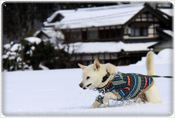 2012,2,20雪遊び9