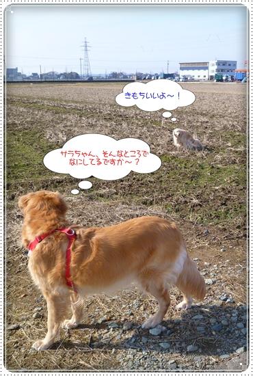 2012,2,22お散歩5