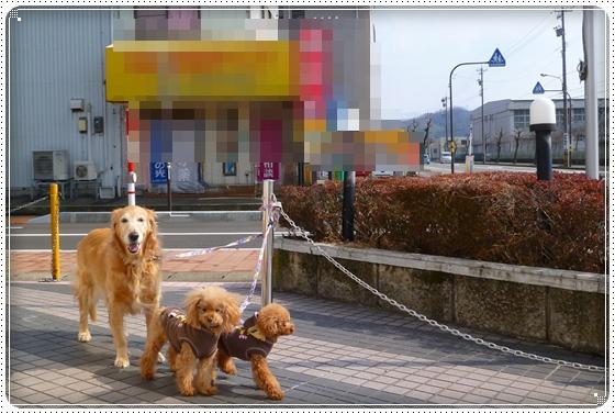 2012,2,24お散歩4