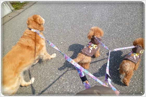2012,2,24お散歩1