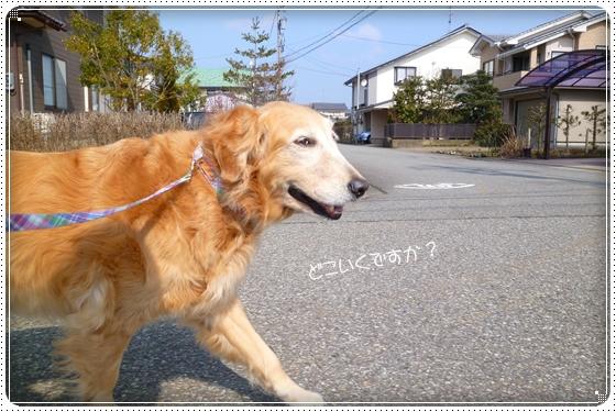 2012,2,24お散歩2