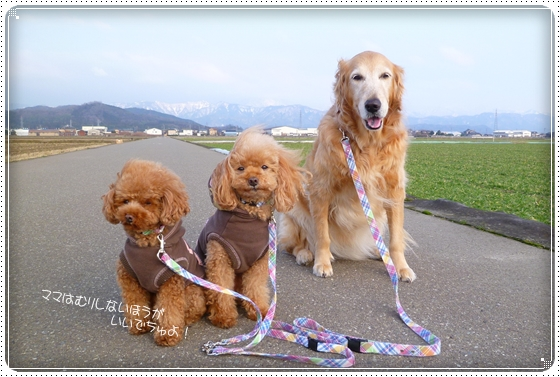 2012,2,24お散歩11