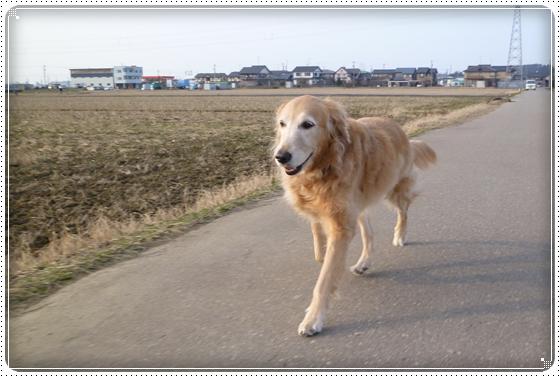 2012,2,24お散歩10