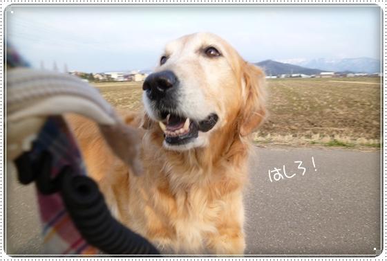 2012,2,24お散歩7