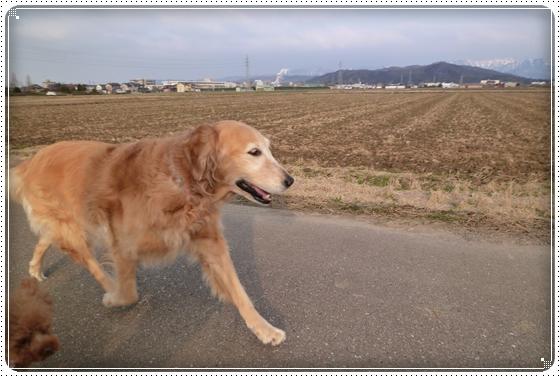 2012,2,24お散歩8
