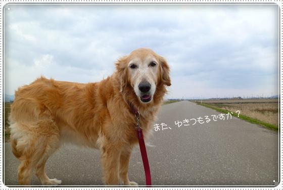 2012,2,25お散歩2
