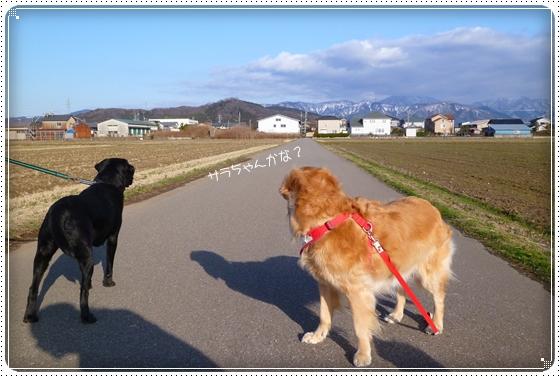 2012,2,29お散歩5