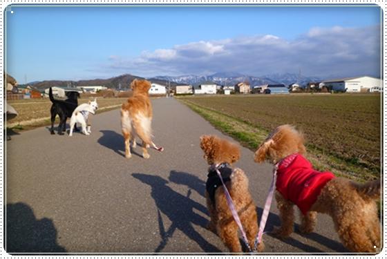 2012,2,29お散歩6