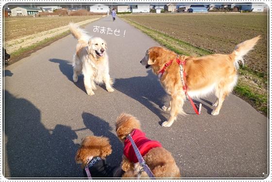 2012,2,29お散歩7