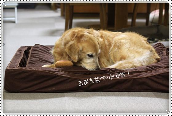 2012,3,1お散歩6