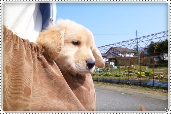 2012,3,11お散歩3