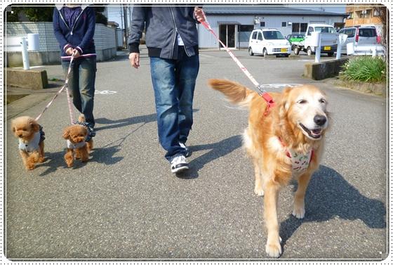 2012,3,11お散歩1