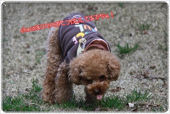 2012,3,18お庭遊び7