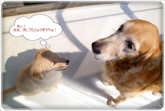 2012,3,27お散歩5