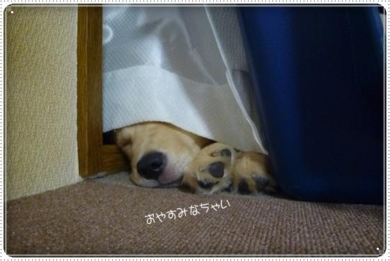 2012,3,27お散歩10