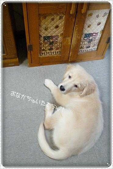 2012,3,29ガウガウ遊び6