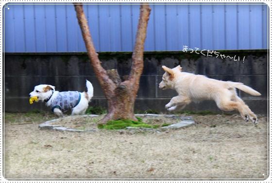 2012,4,3お庭遊び6