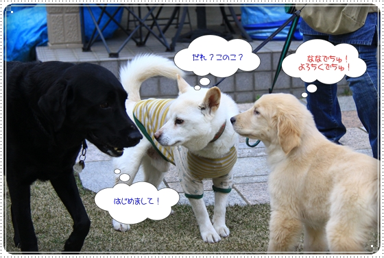 2012,4,3お庭遊び1