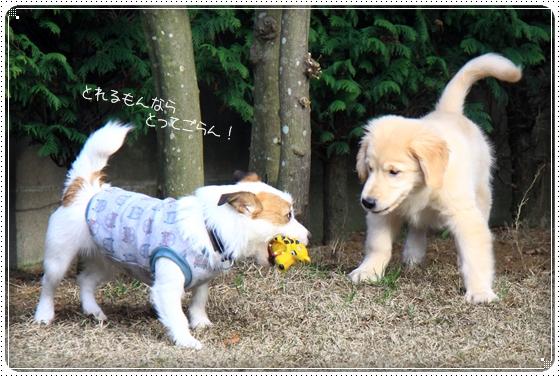 2012,4,3お庭遊び8