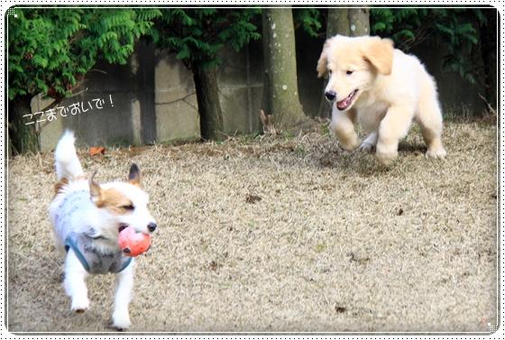 2012,4,3お庭遊び7