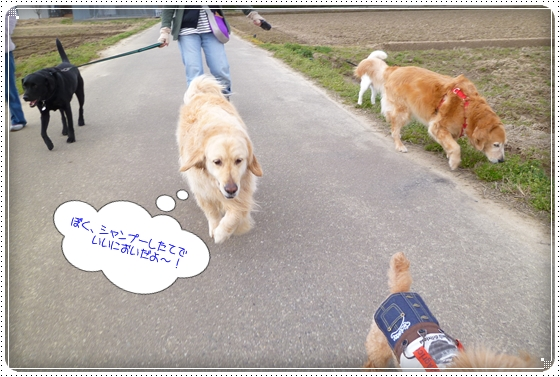 2012,4,4お散歩6