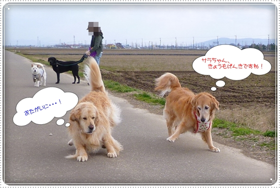 2012,4,4お散歩2