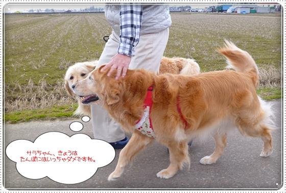 2012,4,4お散歩7