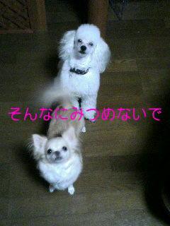061011_2010~01001.jpg
