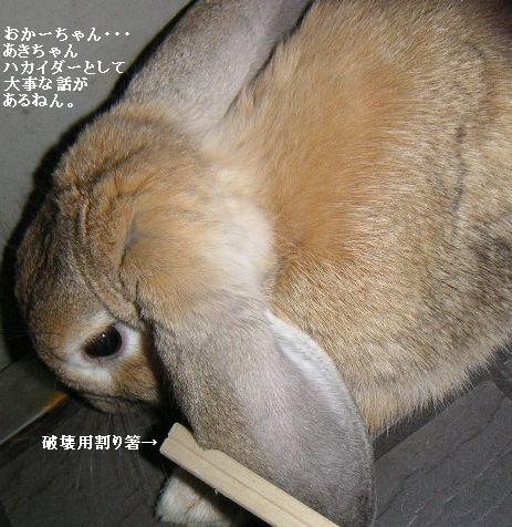 あきちゃんは考える葦。