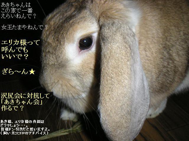 目指せウサギ界のエリカ様?