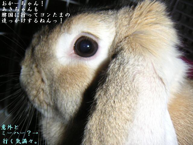 あきちゃんはヨンたまファン。