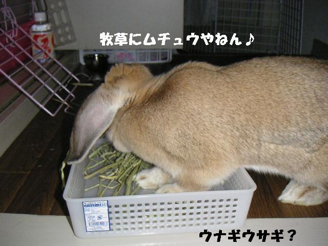 ウナギウサギ。