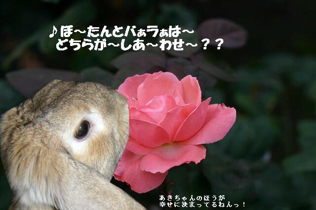 どちらがしあ~わせ~♪