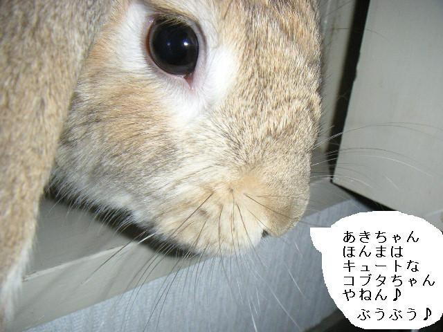 あきちゃんの正体はコブタ!?