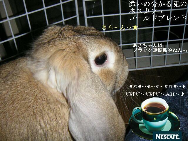 違いの分かるウサギ・ネスカフェゴールドブレンド。