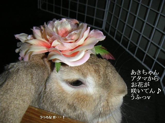 アタマにお花が咲いた♪