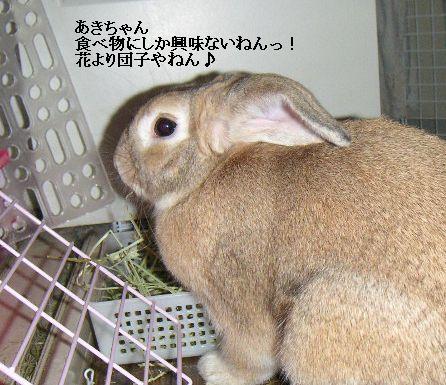 あきちゃんは花より団子やねん!
