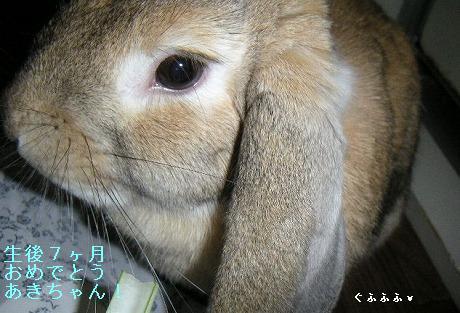 生後7ヶ月おめでとう、あきちゃん。