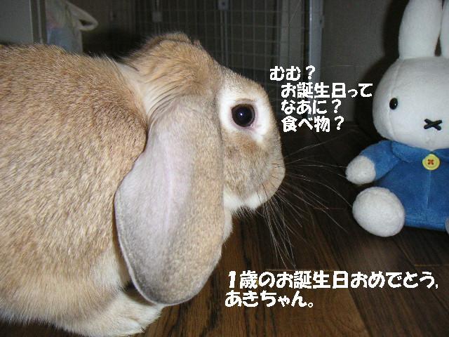 今日はあきちゃんの誕生日です!