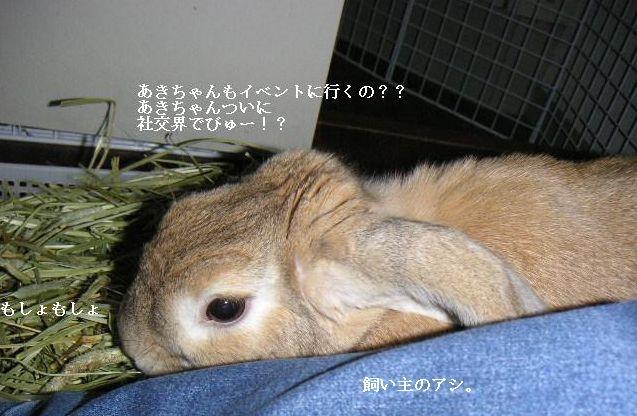 あきちゃん社交界デビュー!?