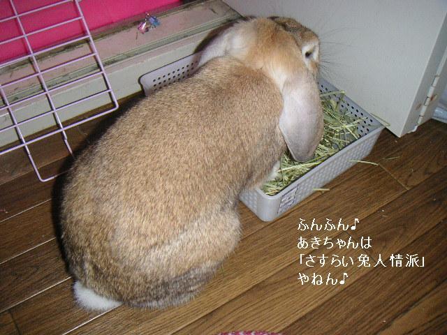さすらい兔・人情派。