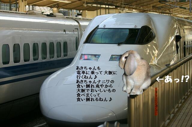 電車とナニワの食い倒れ兎あきちゃん。