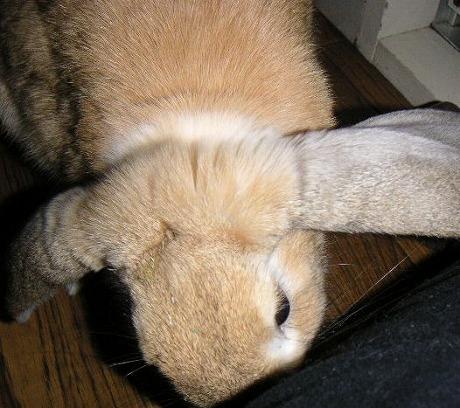 あきちゃんは匂いを嗅ぐのがお好き。