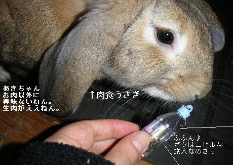 あきちゃんは肉食だった!?
