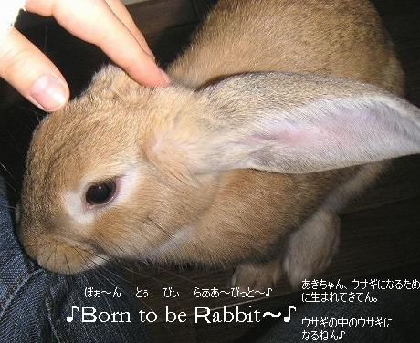 ウサギになるために生まれてきたの~♪