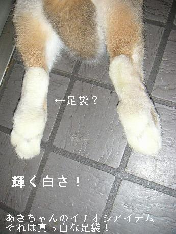 春のイチオシアイテム、それは足袋。