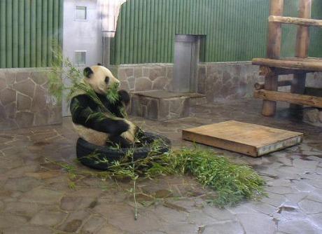 パンダその2.