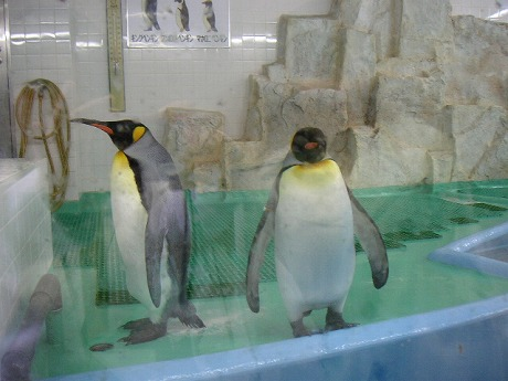 ペンギン。