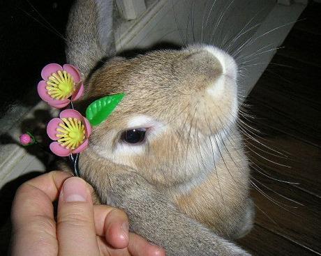 あきちゃん、お花似合う?